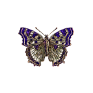 cropped-butterfly-2138559_6401.png